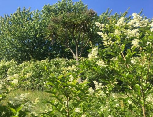 Roots in the Past – Landscape Design at Holloway
